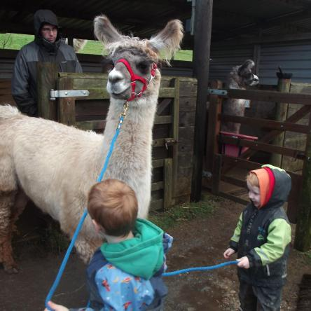 llama with children