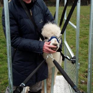 alpaca chute