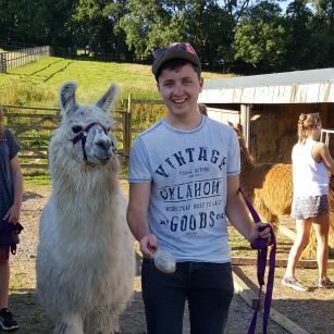 brushing llamas